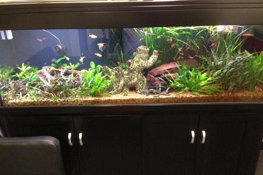 6 Foot Standard Aquarium Gallery