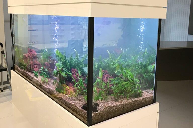 About Aquarium Leasing Specialists 1