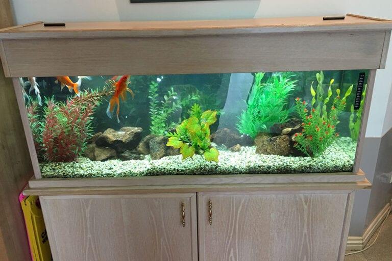 About Aquarium Leasing Specialists 2