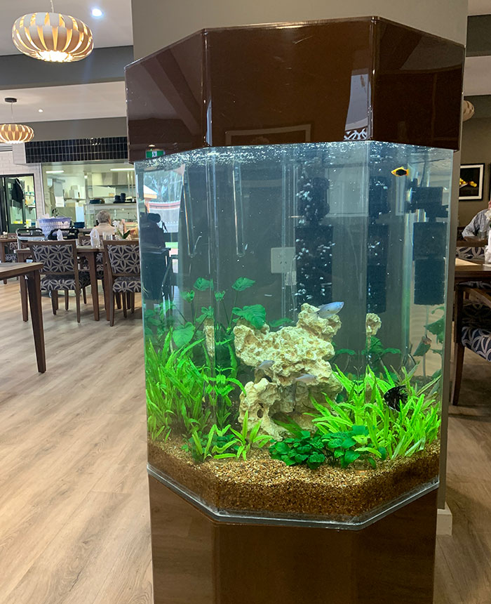 About Aquarium Leasing