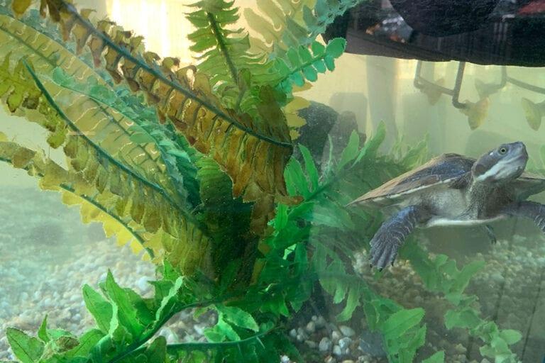 Aquarium Health Benefits 2
