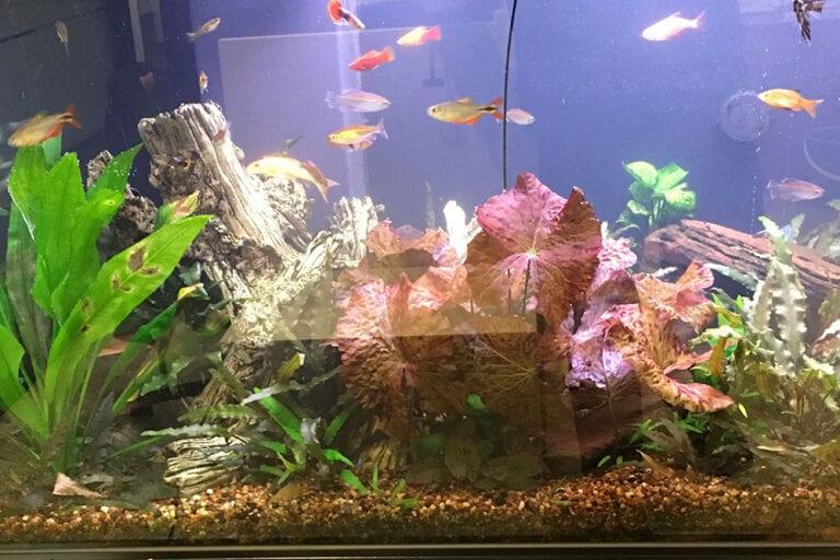 Aquarium Health Benefits