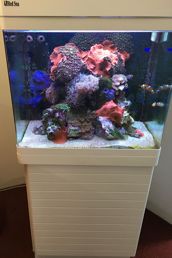 Aquarium Maintenance - Clown Fish