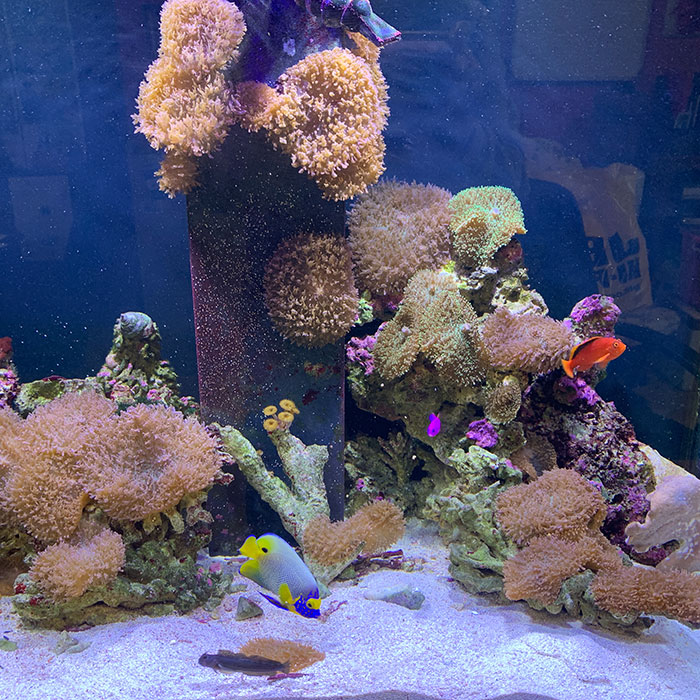 Fish Boarding With Aquarium Leasing Specialists