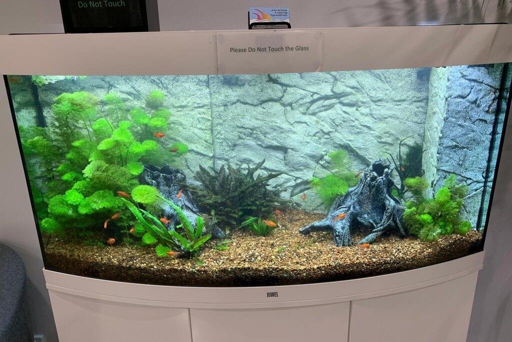 Jewel Vision 260 Aquarium 2