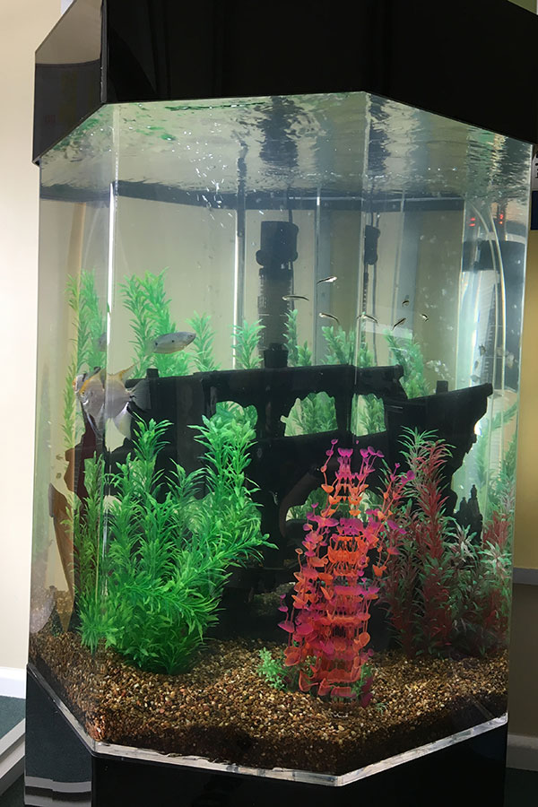 Long Term Aquarium Hire